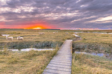 Boardwalk In Tidal Marshland N...