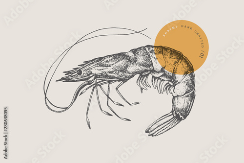 Fotografía  Large shrimp, drawn by graphic lines on a light background