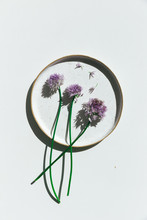 Still Life Of Chive Flowers On...