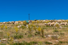 Herd Of Colored Sheep Feeding On A Hill, Sheep, Kangal Dogs And Donkey Together, Turkey