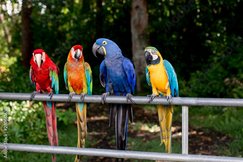 Photo sur Toile Perroquets Tropical Birds in Maui, Hawaii