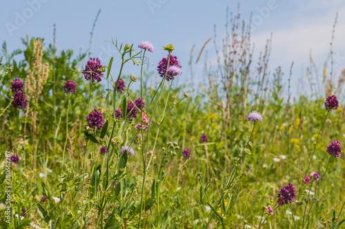 Foto op Plexiglas Weide, Moeras Summer meadow with luxurious multicolored wildflowers