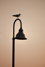 Silhouette Of A Gull On A Lamp...