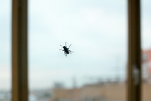 Big Black Fly Silhouette On Window Glass On Blue Sky And City Background Close Up, Diptera Bloodsucking Insect, Protection Against Insect Bites, Disease Vectors And Epidemic Spread Concept, Copy Space