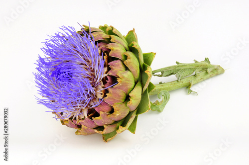 Photo Flowering globe artichoke flower, also known as green artichoke and French artic