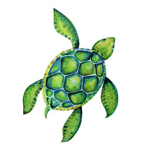 Beautiful Turtle Art Water Color Background Illustration