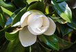 canvas print picture Beautiful white flower on a tree