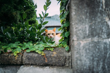 A Cat With Glass On A Wall, Mi...