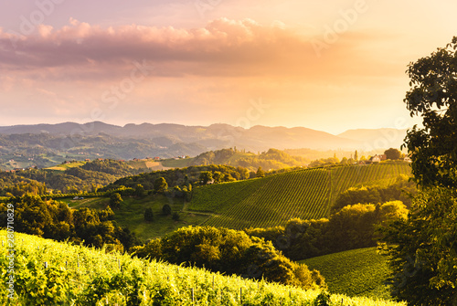 Garden Poster Vineyard View from famous wine street in south styria, Austria at tuscany like vineyard hills