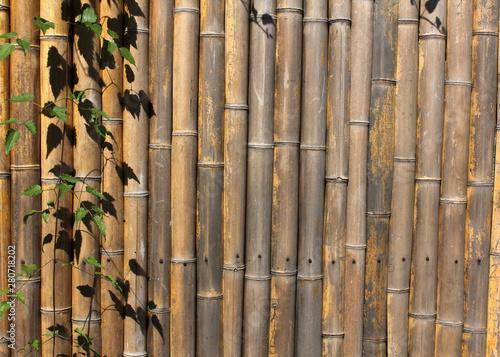 Photo  palissade de bambou