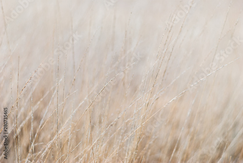 Plakaty beżowe  dry-grass-in-the-meadow-in-winter-close-up-blurred-background-soft-focus-on-individual-straws-for-a-background-in-natural-soothing-colors