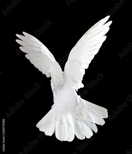 Flying white doves on a black background Fototapete