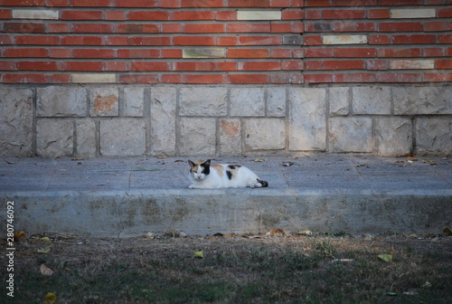 Spanish Calico Cat on Step - Buy this stock photo and