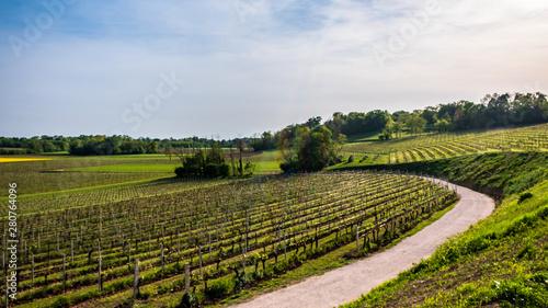 Obraz Colza fields and vineyards in the italian countryside - fototapety do salonu