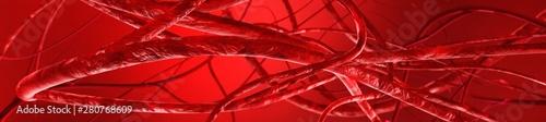 Fotografía  blood vessels, veins and arteries, circulatory system, 3d rendering