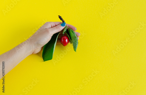 Pinturas sobre lienzo  Hand holding cherry branch on yellow background. Copy Space