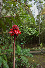 Plantas Y Flores De Costa Rica