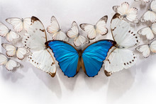 Cluster Of White Butterflies A...
