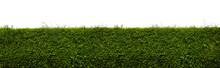 Long Tree Hedges Or Green Leav...