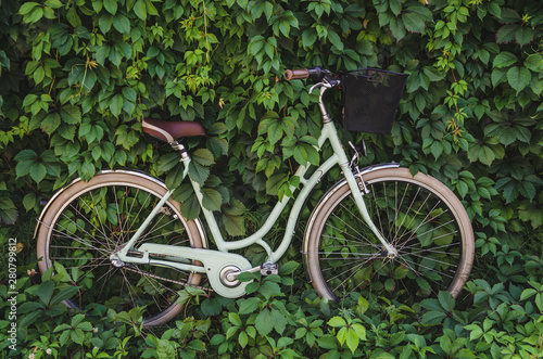 Aluminium Prints Bicycle City bicycle with a basket on green ivy creeper wall background.