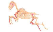 Death Horse