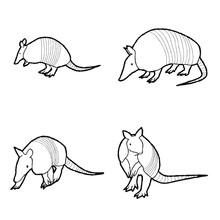 Armadillo Animal Vector Illust...