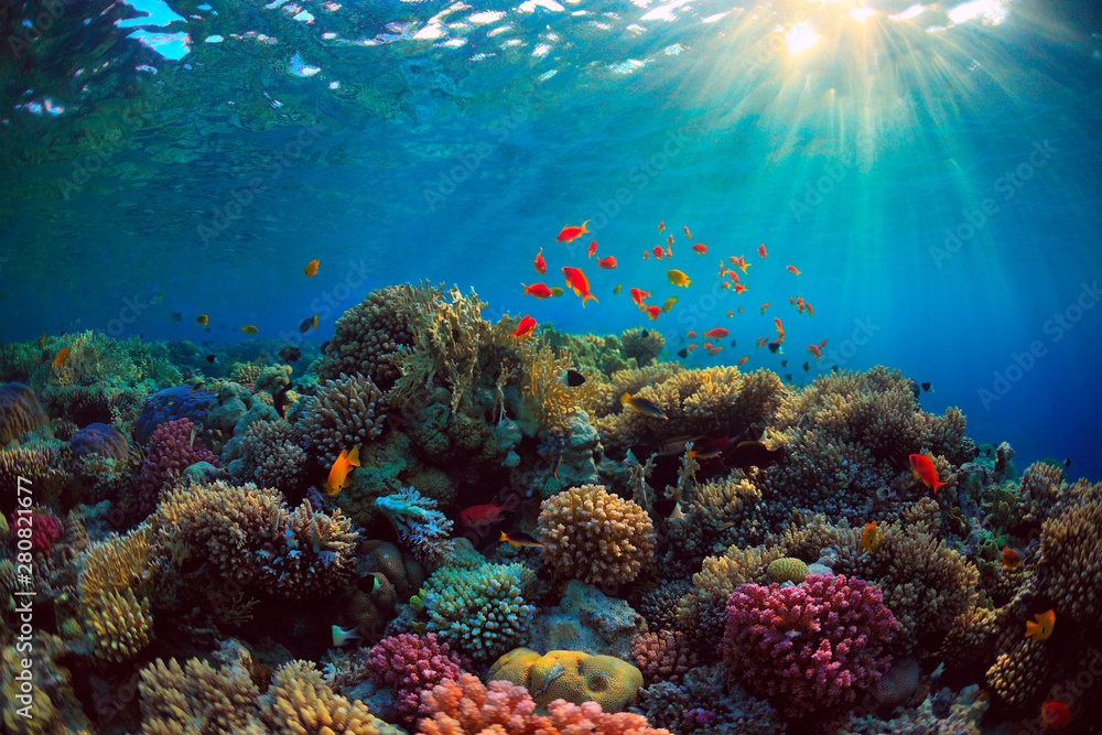 Fototapety, obrazy: coral reef with fish