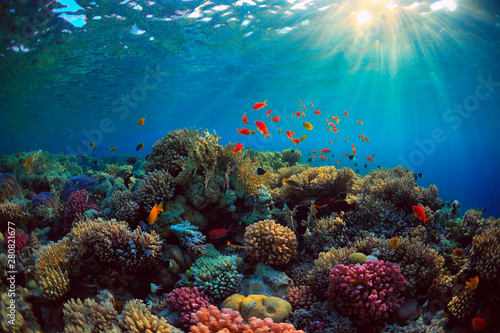 La pose en embrasure Recifs coralliens coral reef with fish