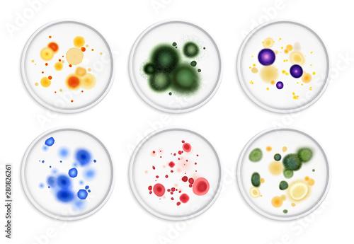 Fotografie, Obraz Moldiness Bacteria Colonies Set