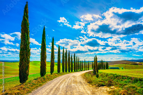 Foto  Tuscany, Cypress Trees white road rural landscape, Italy, Europe.