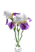 Bouquet Of Three Irises In A Glass Vase On A White Background. Isolated Object. Vertical Shot