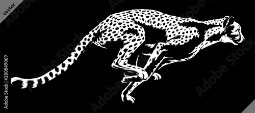 Fotografie, Tablou black and white linear paint draw cheetah illustration art