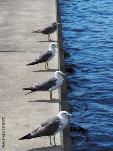 Photo 並ぶ鴎