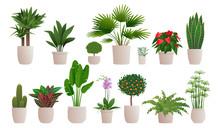 Set Of Decorative Houseplants ...