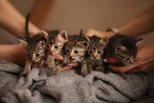 Brood Of Little Cute Kittens O...