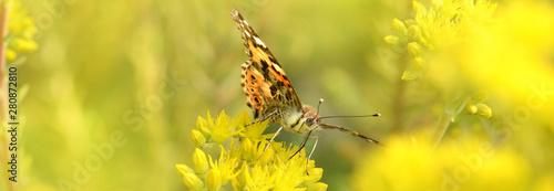 Fotografie, Obraz  Schmetterling 609