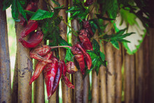 Red Chili Peppers Hanging On A Rope On The Background Of A Wicker Wooden Fence