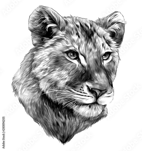 Photo sur Toile Croquis dessinés à la main des animaux little lion cub head, sketch vector graphic monochrome illustration on white background