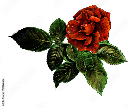 rose flower with leaves, sketch vector graphic color illustration on white background Wall mural