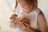 Fototapeta Zwierzęta - Little girl holding baby cat. Kids and pets