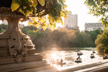Summer In Central Park New Yor...