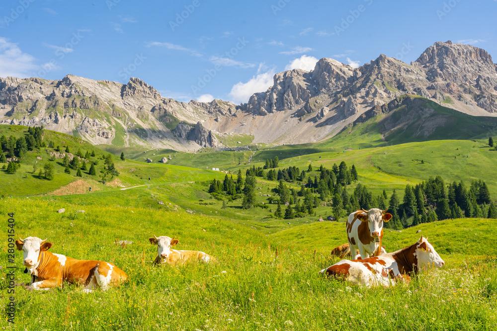 Fototapeta Scenery Alps with cow on green field