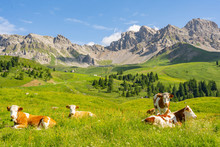 Scenery Alps With Cow On Green Field