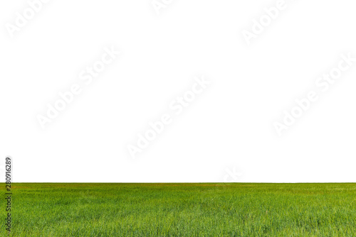 Fototapety, obrazy: Green field with rye isolated on white background.