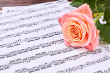 Pink Rose On Musical Notes She...