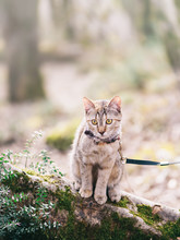 Cat Walking In The Forest Outdoor.