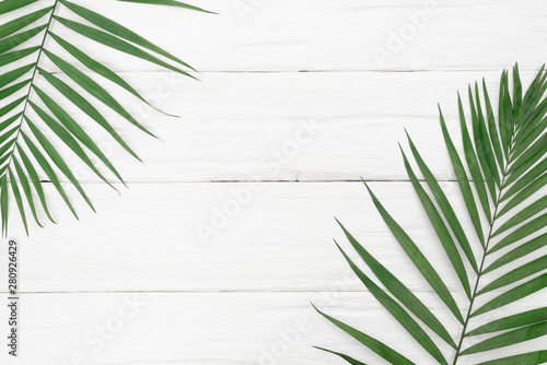 Poster Vegetal A green palm leaf on the white wooden background.