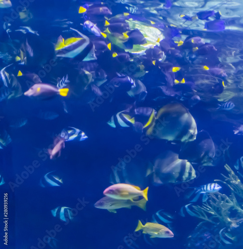 Valokuva  many different tropical fish species swimming under water, Marine life backgroun
