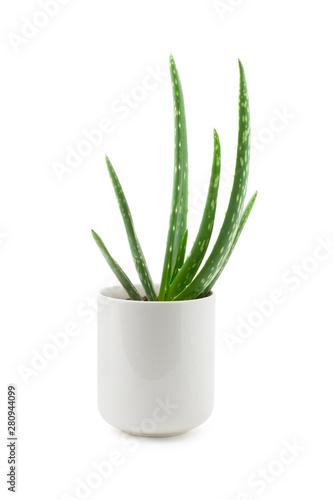 aloe vera plant in a white ceramic pot isolated against a white background, beau Fototapeta