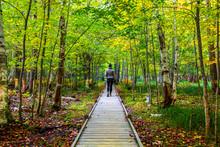 Female Hiker On Jesup Trail Wo...